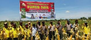 Jaga Ketahanan Pangan, Polsek Kubu Panen Raya 3 Hektar Kebun Jagung
