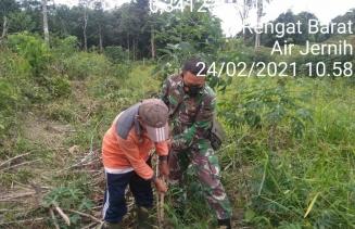 Babinsa Kodim 0302/Inhu Laksanakan Pendampingan Petani Panen Singkong