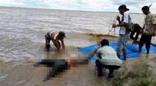 Tubuh Membusuk, Diduga Korban Speeboat yang Dihantam Bono