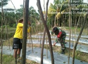 Babinsa Kodim 0302/Inhu Dampingi Petani Menanam dan Membuat Lanjaran Kacang Panjang