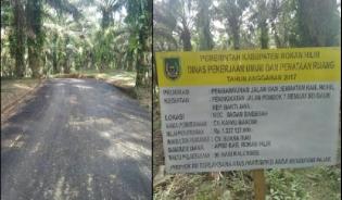 Waduh.... Peningkatan Jalan Terkesan Dipaksa, Pohon Sawit Sampai Di Aspal