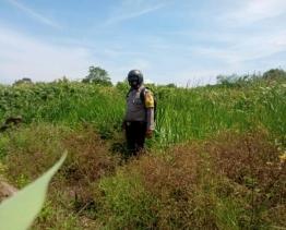 Bhabinkamtibmas Kep Sungai Daun Laksanakan Giat Patroli Karhutla
