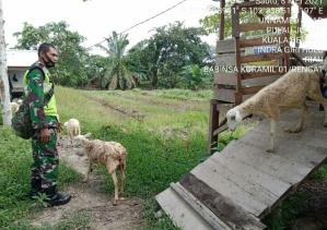 Memotivasi Peternak Kambing, Babinsa Koramil 01/Rengat Turun Kelapangan