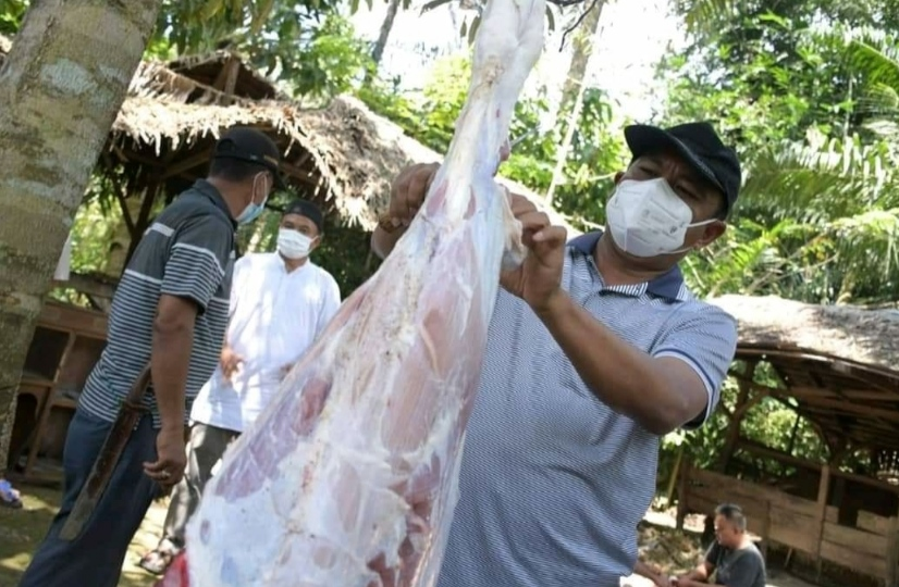 Idul Adha 1442 H, Pemkab Sergai Bagikan 89 Ekor Lembu dan 2 Ekor Domba ke Seluruh Kecamatan