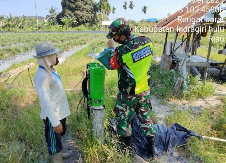 Sukseskan Ketahanan Pangan, Babinsa Kodim 0302/Inhu Bantu Perawatan Cabe Warga Binaan