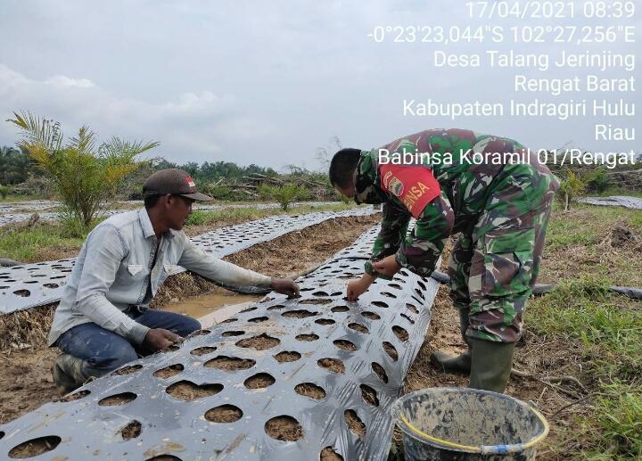 TNI Peduli, Babinsa Koramil 01/ Rengat Dampingi Petani Menanam Bawang Merah