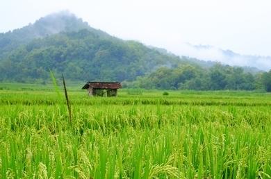 Dana Desa Juga Anggarkan Bantuan Sosial untuk 5,8 Juta KK di Desa