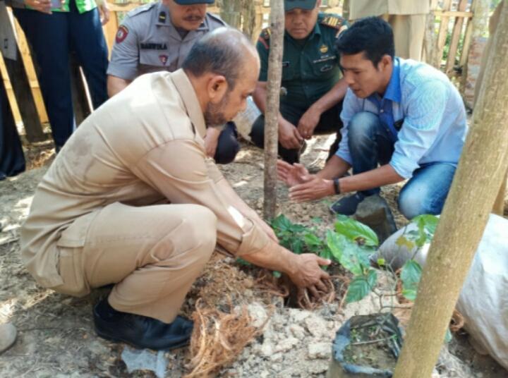 Wakil Bupati Aceh Tamiang Tanam Perdana Cabe Jamu Di Kampung Benteng Anyer