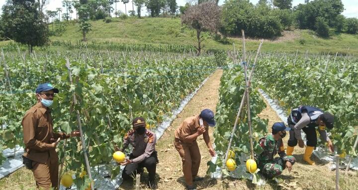 Kapolsek Batu Hampar Laksanakan Sambang Warga Terhadap Petani Bawang Merah dan Melon